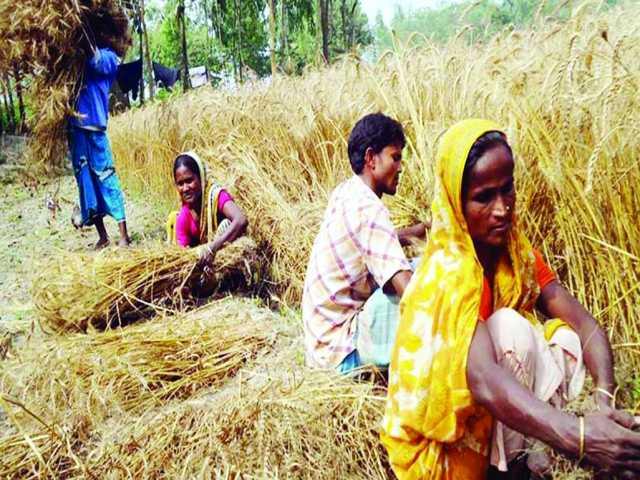RangpurAgriculture